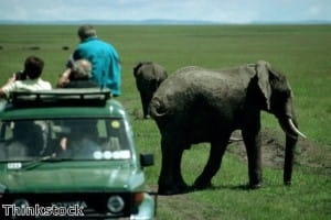 FZS aims to boost the Serengeti's eco-system
