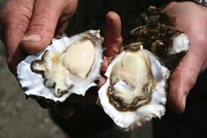 Head to the Pick 'n' Pay Knysna Oyster Festival